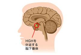 ヒト成長ホルモン(HGH)イメージ写真